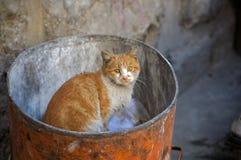homeless кота стоковые изображения rf