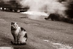 Homeless. Two dirty homeless cats warms themselves in industrial steam Stock Photos