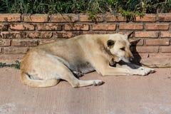 Homeless abandoned dog Royalty Free Stock Images
