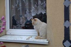 Homeless adult cat royalty free stock photos