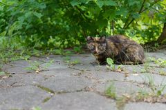 A homeless animal cat sits under a green bush on the street and stares intently stock photos