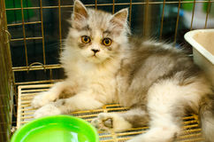 Homeless animals. Kitten looking out from behind the bars of his Stock Photo