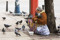 Homeless begging woman pigeons Royalty Free Stock Photography