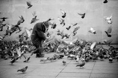 Free Homeless Bird Man Royalty Free Stock Photo - 87395895