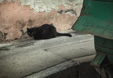 Homeless black cat on the background of peeling wall and garbage stock images