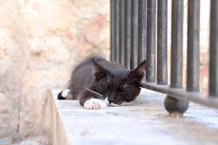 Homeless black cat sleeping outdoors. Homeless black  cat with white paws and whiskers sleeping outdoors Royalty Free Stock Photo