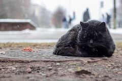 Homeless black cat sleeping under the snow. On the background of cars stock photography
