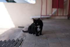 A homeless black cat wander around the street. Royalty Free Stock Photos