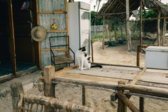 Homeless black and white cat sitting on wooden table royalty free stock photos