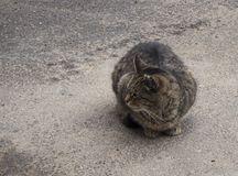 A homeless brown cat on the street royalty free stock images