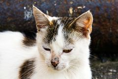 The homeless cat Stock Images