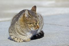 Homeless cat Stock Photo