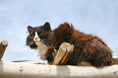 Homeless cat in an abandoned camp Stock Images