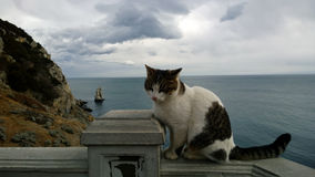 Homeless cat on the background of beautiful panoramic views of the sea and rocks in Crimea Royalty Free Stock Photography