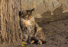 Homeless cat basking in the rays of the autumn sun Royalty Free Stock Photography