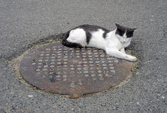 A homeless cat. Stock Photography