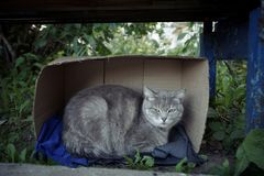 Homeless cat. A homeless cat in a cardboard box Stock Image