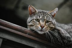 Homeless cat close-up looking at the camera royalty free stock images
