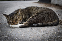 Homeless cat. On a cloudy day Royalty Free Stock Photography