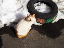 Attentive look of a stray eat. Homeless cat cold in winter, attentive look of a stray eat royalty free stock images