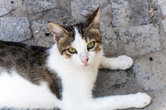 Homeless cat. Cute homeless cat on the street Royalty Free Stock Images