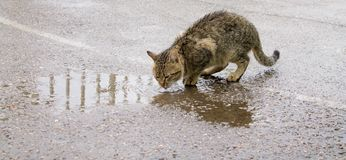 Homeless cat is drinking water stock photography