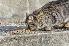 Cat Eating Dry Food Stock Photo