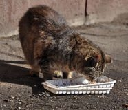 Homeless cat eats food. Sick unhappy homeless cat eats food Royalty Free Stock Photos