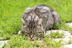 A homeless cat eats a treat stock photo