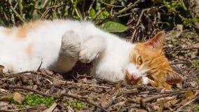 Homeless cat enjoy noon's sunshine. In garden Stock Photos