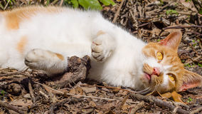 Homeless cat enjoy noon's sunshine. In garden Royalty Free Stock Images