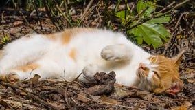Homeless cat enjoy noon's sunshine. Homeless cat enjoy sunshine in garden Stock Photos
