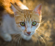 Homeless cat. Royalty Free Stock Images