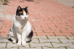 A homeless cat. Ginger cat sitting on the road. Sad cat Stock Image