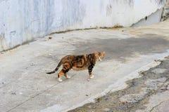 Homeless cat at the hong kong street Stock Images