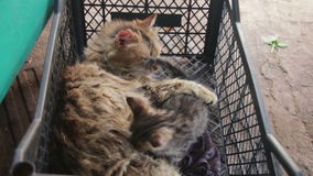 Homeless Cat with Kittens in Nature stock video footage