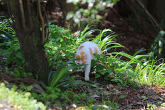 Homeless cat at kyoto japan Stock Photography