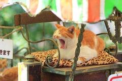 Homeless cat at kyoto japan Stock Images