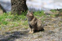 Homeless cat at kyoto japan Royalty Free Stock Images
