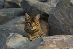 Homeless cat living on istanbul street photography Royalty Free Stock Images