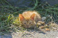 Homeless cat living on istanbul photography Royalty Free Stock Photo