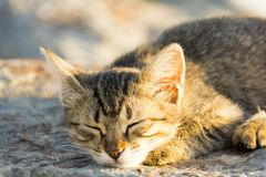 Homeless cat living on istanbul photography Stock Photos