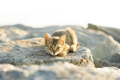 Homeless cat living on istanbul photography Royalty Free Stock Photography
