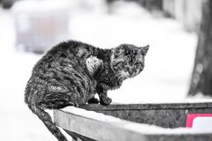 Homeless cat looking for food. In winter royalty free stock images