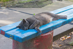 Homeless cat lying on a bench near the house Stock Photos