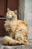 Homeless cat Royalty Free Stock Images