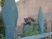 Homeless cat Stock Photo