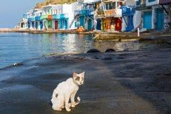 Homeless cat near the sea Stock Photography