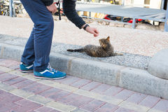 Homeless cat, pet and animals concept - Man caress street cats.  Stock Photography