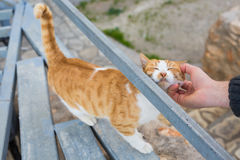 Homeless cat, pet and animals concept - Man caress street cats.  Royalty Free Stock Image